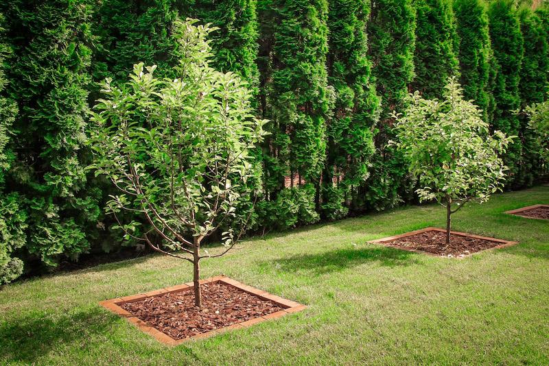 Плодовые кустарники которые сажают в тени 14
